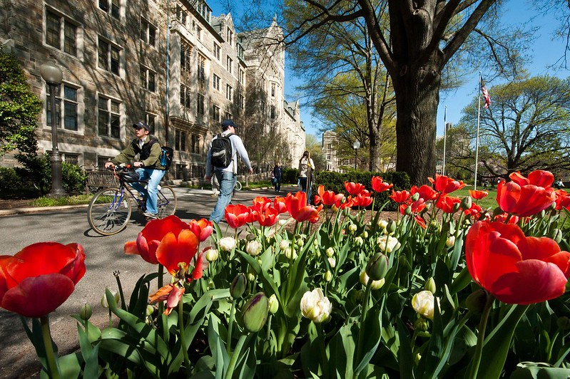 A student riding a bicycle and other students walking past main campus buildings with red tulips in foreground.